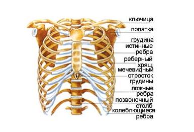mindste knogle i menneskekroppen